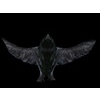 11 14 03 9 crows3 4