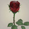 23 29 30 608 realistic rose collection 04 4
