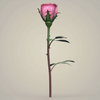 23 29 30 803 realistic rose collection 03 4