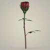 23 29 30 861 realistic rose collection 05 4