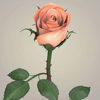 23 29 32 389 realistic rose collection 06 4