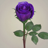 23 29 33 107 realistic rose collection 08 4