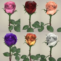 Rose Flower Collection 3D Model