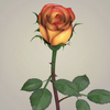 23 29 34 380 realistic rose collection 11 4