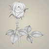 23 29 35 640 realistic rose collection 14 4