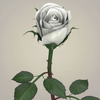 23 29 36 405 realistic rose collection 12 4