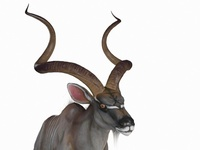 Antilope Animated 3D Model