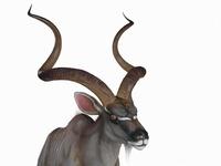 Antilope Animated 3D Model