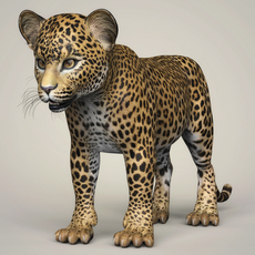 Photorealistic Leopard Cub 3D Model