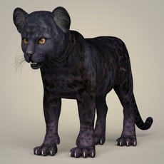 Photorealistic Panther Cub 3D Model