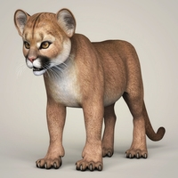 Photorealistic Cougar Cub 3D Model