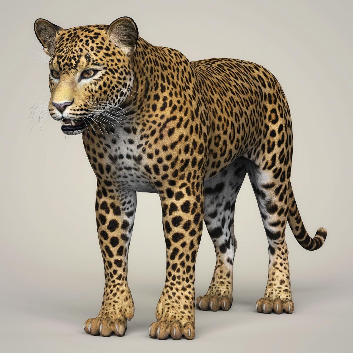 Photorealistic Wild Leopard 3D Model