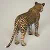18 36 03 924 photorealistic wild leopard 05 4