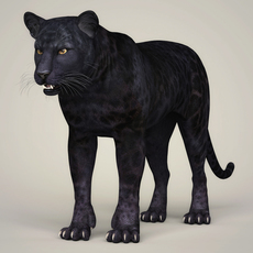 Photorealistic Wild Panther 3D Model