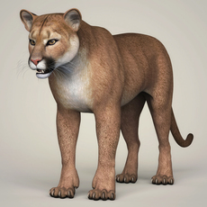 Photorealistic Wild Cougar 3D Model