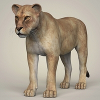 Photorealistic Wild Lioness 3D Model