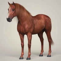 Photorealistic Brown Horse 3D Model