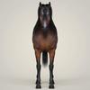 10 35 15 747 photorealistic horse 03 4