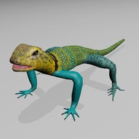 Collared Lizard 3D Model