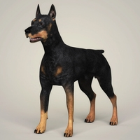 Realistic Doberman Dog 3D Model