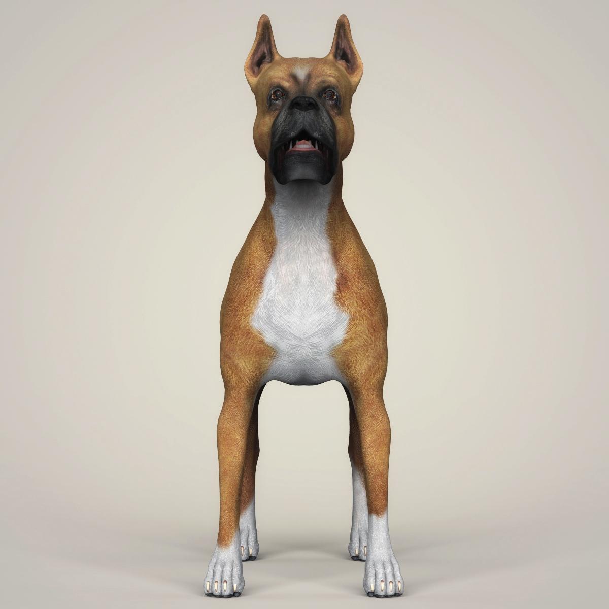 Realistic Boxer Dog 3D Model