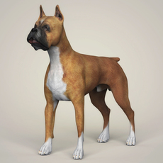 Realistic Boxer Dog 3D Model