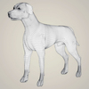 07 13 55 742 realistic dalmation dog 07 4