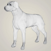07 49 34 169 realistic black labrador dog 07 4