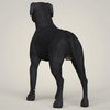 07 49 34 480 realistic black labrador dog 04 4