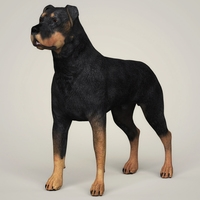 Realistic Rottweiler Dog 3D Model
