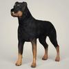 08 59 49 290 realistic rottweiler dog 01 4