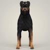 08 59 49 327 realistic rottweiler dog 02 4