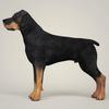 08 59 49 576 realistic rottweiler dog 03 4