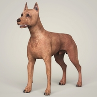 Realistic Miniature Pinscher Dog 3D Model