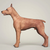 09 03 56 388 realistic miniature pinscher dog 03 4