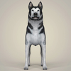 10 46 51 574 realistic alaskan malamute dog 02 4