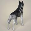 10 46 51 963 realistic alaskan malamute dog 05 4
