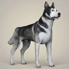 10 46 52 14 realistic alaskan malamute dog 06 4