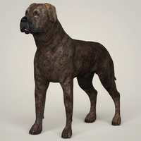 Realistic Mastiff Dog 3D Model