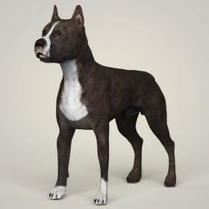 Realistic American Staffordshire Dog 3D Model