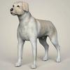 11 47 22 161 realistic labrador dog 01 4