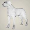 11 47 23 317 realistic labrador dog 07 4