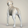 11 47 24 146 realistic labrador dog 04 4