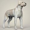 11 47 24 266 realistic labrador dog 06 4