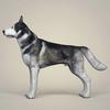 08 19 26 1 realistic alaskan malamute dog 03 4