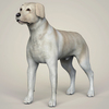 08 19 26 2 realistic labrador dog 01 4