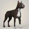 08 19 28 424 realistic american staffordshire dog 06 4