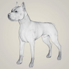 08 19 28 52 realistic american staffordshire dog 07 4