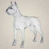 08 19 30 212 realistic boxer dog 07 4