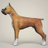 08 19 30 749 realistic boxer dog 03 4